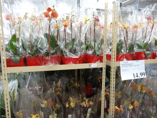 Cold Spring Mn >> Spring has arrived at Costco