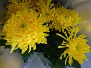 Yellow mums at Costco