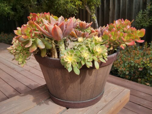 Succulents in resin Whiskey Barrel planter - Garden Planters
