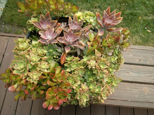 Succulents in resin Whiskey Barrel planter