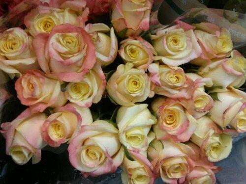 Mother's day 05/12/13  - 2 dozen Roses Costco