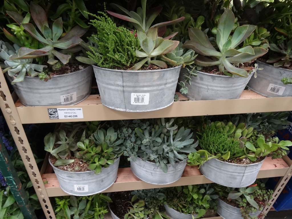 Succulent Garden Costco