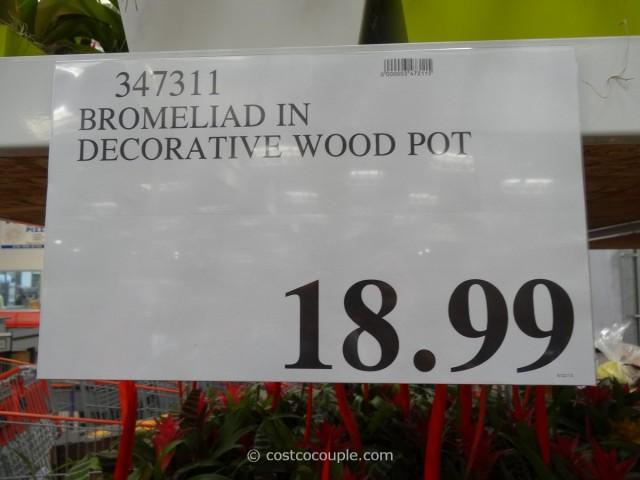 Bromeliad Costco 1
