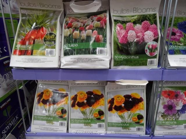 Bulbs to Blooms Fall Bulbs Costco 1