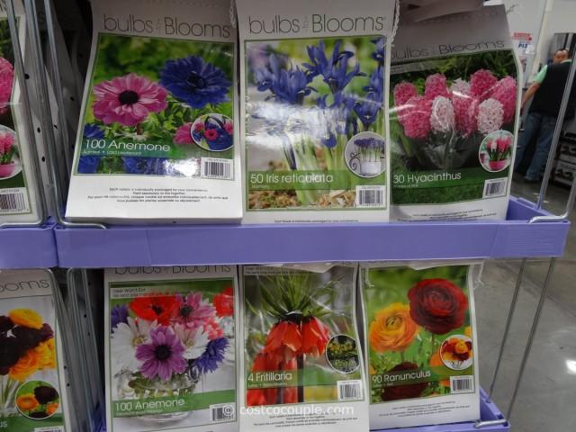 Bulbs to Blooms Fall Bulbs Costco 2