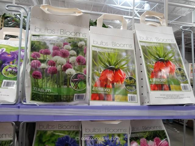 Bulbs to Blooms Fall Bulbs Costco 3