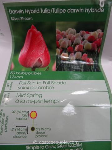 Bulbs to Blooms Fall Bulbs Costco 7