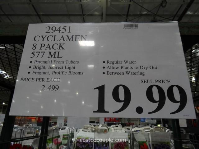 Cyclamen 8-Pack Costco 5