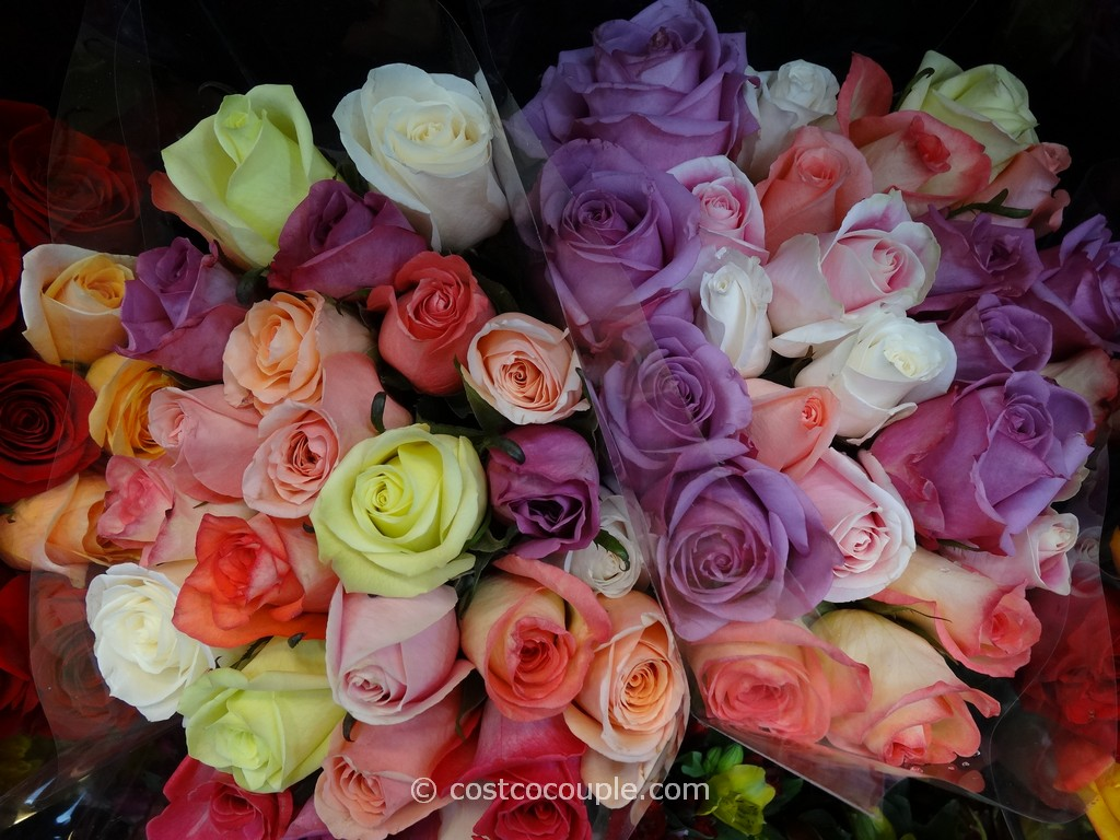 2 Dozen Premium Rainforest Alliance Certified Roses