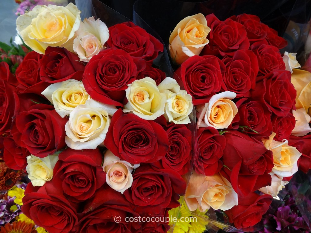Rainforest Alliance Certified 2 Dozen Premium Roses Costco 6