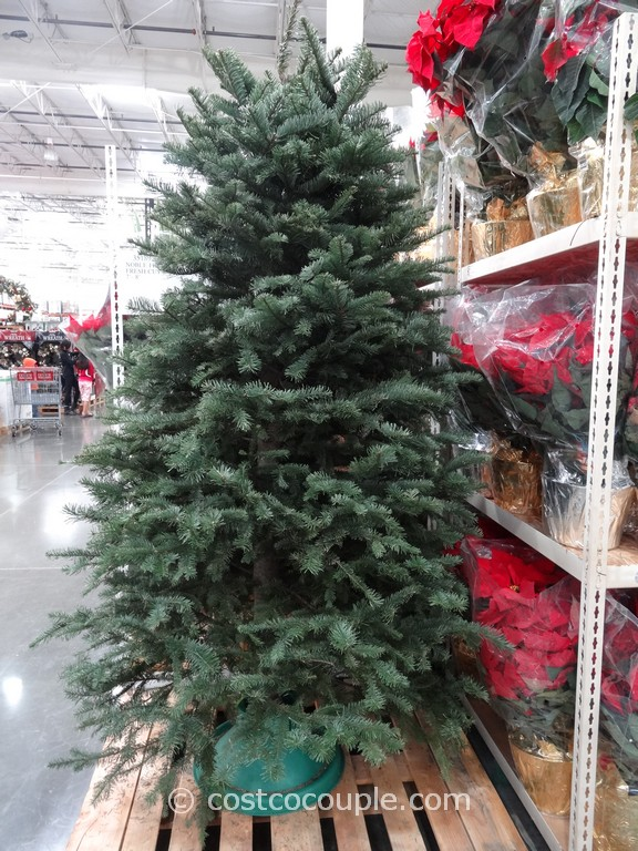 Fresh Cut Noble Fir Christmas Tree Costco 1
