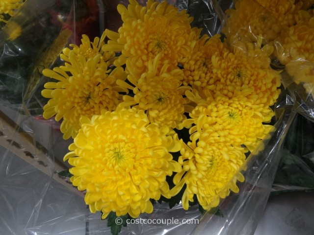 Chrysanthemum Costco 2