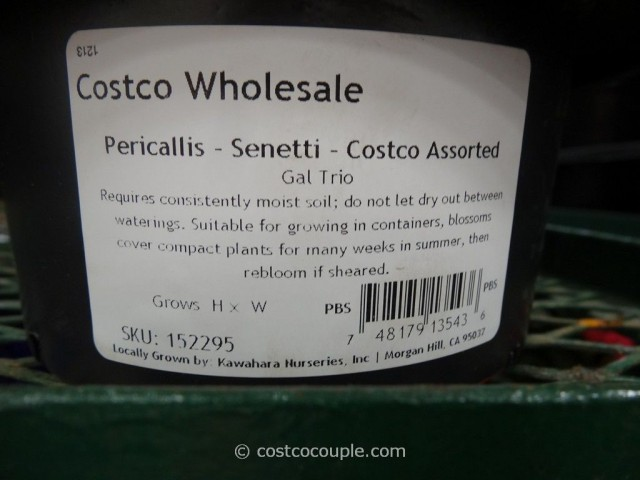 3-Pack Assorted Plants Costco 6