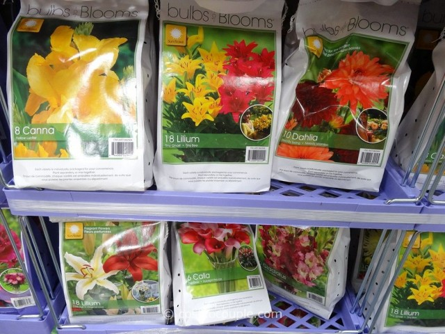 Bulbs to Blooms Spring Bulb Assortment