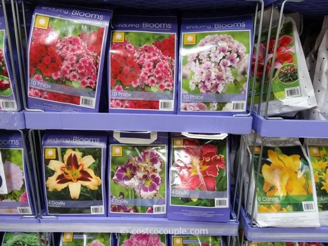 Spring Perennial Assortment Bulbs Costco 1