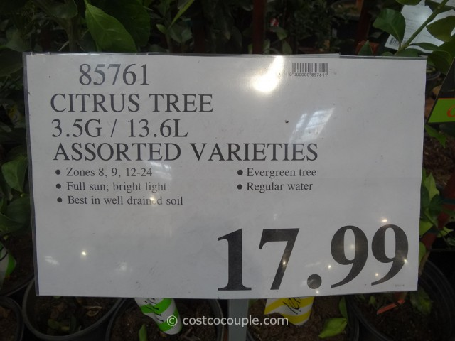 Citrus Trees Assorted Varieties Costco 1
