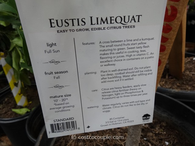 Citrus Trees Assorted Varieties Costco 12