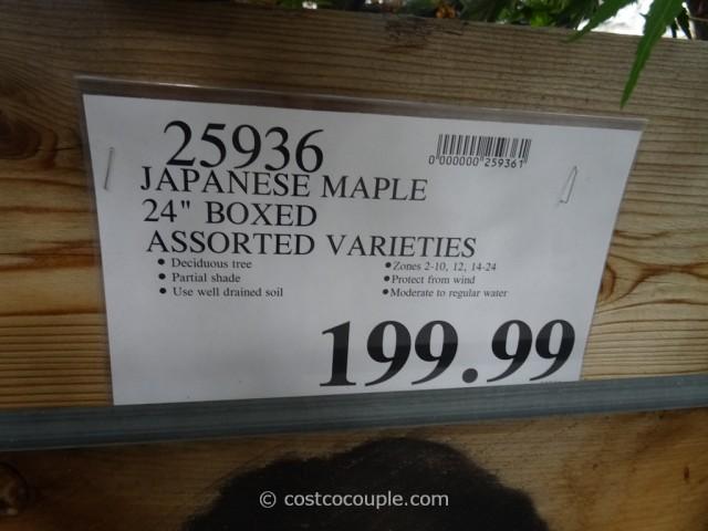 Japanese Maple 24-Inch Box Costco 1