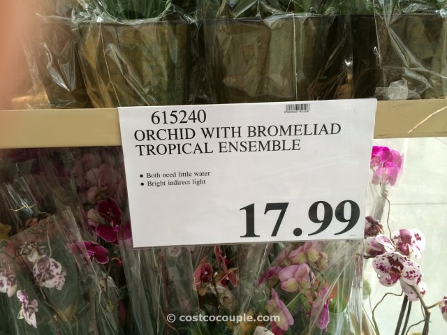 Orchid with Bromeliad Costco 1