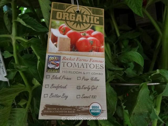 Rocket Farms Organic Heirloom Tomatoes Costco 3