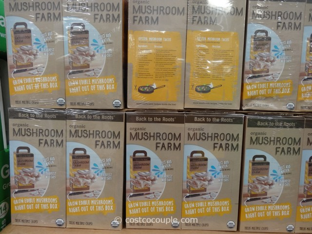 Back To The Roots Organic Mushroom Grow Kit Costco 2