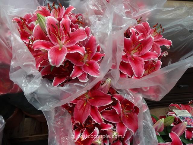 Stargazer Lilies 10-Inch Pot Costco 4