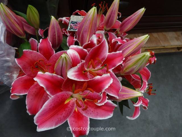 Stargazer Lilies 10-Inch Pot Costco 5
