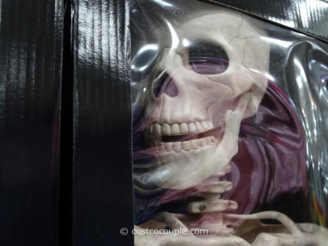 60-Inch Skeleton Costco