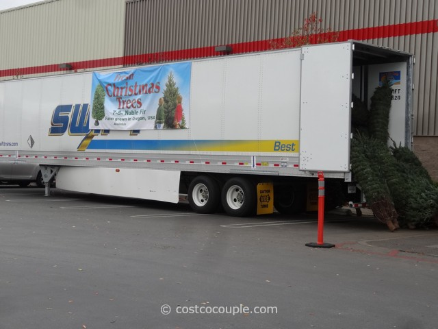 Noble Fir Fresh Cut 2014 Christmas Tree Costco 1