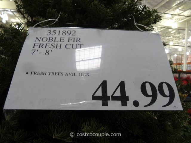 Noble Fir Fresh Cut 2014 Christmas Tree Costco 4