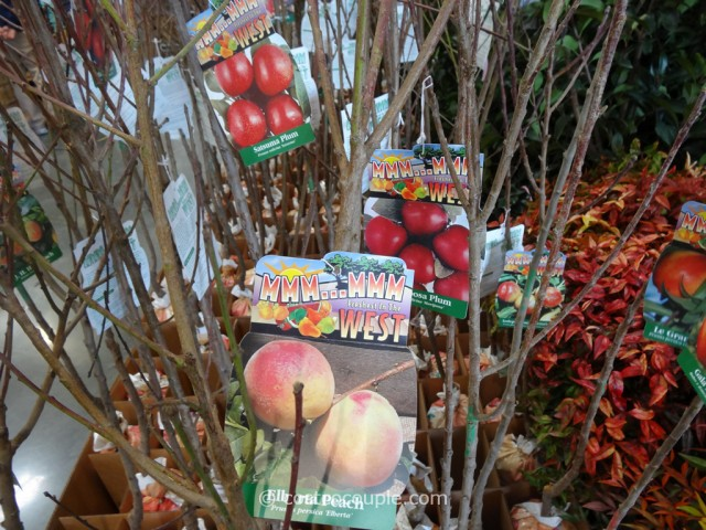 Assorted Fruit Trees