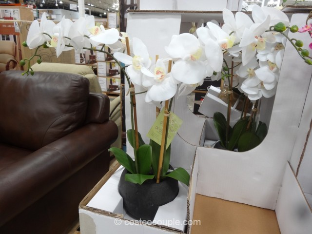 Beaumont Designs Decorative Orchid Costco 2