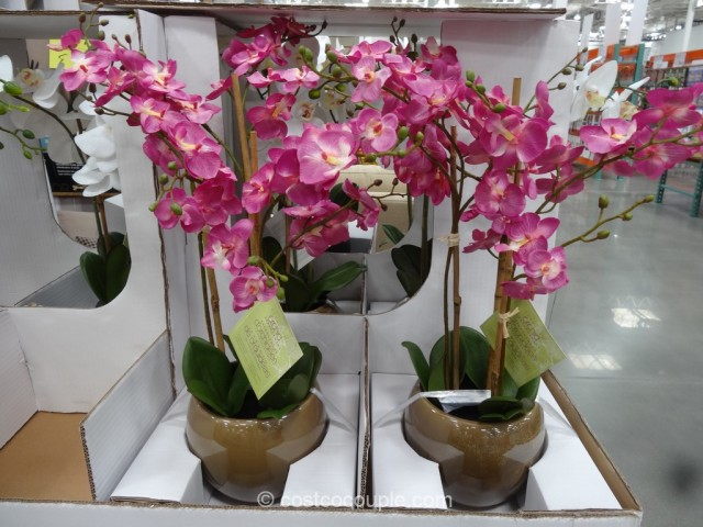 Beaumont Designs Decorative Orchid Costco 3