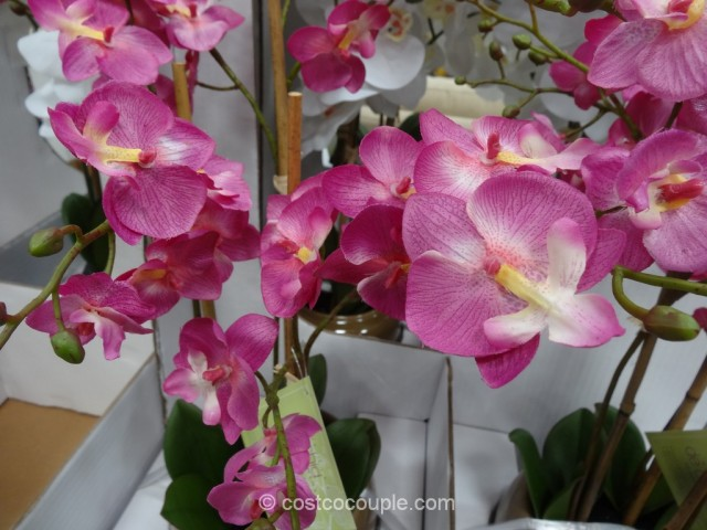 Beaumont Designs Decorative Orchid Costco 4