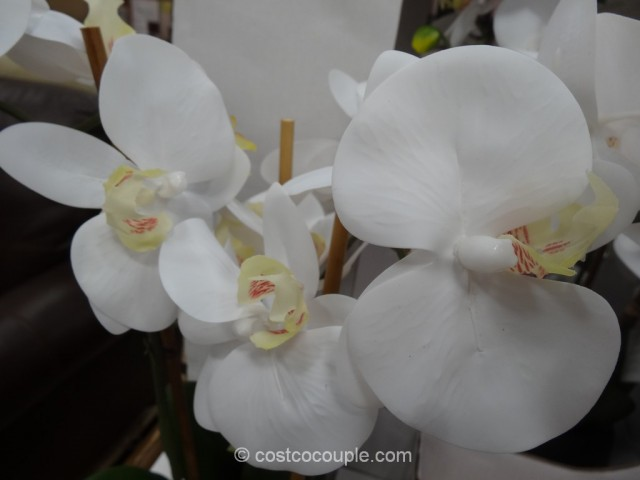 Beaumont Designs Decorative Orchid Costco 5