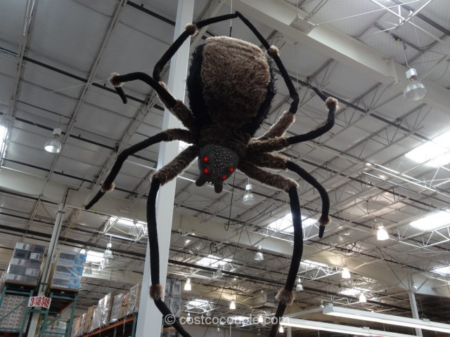 Giant Spider With LED Eyes Costco 2