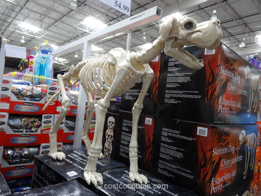Skeleton Dog With LED Eyes and Timer Costco 2