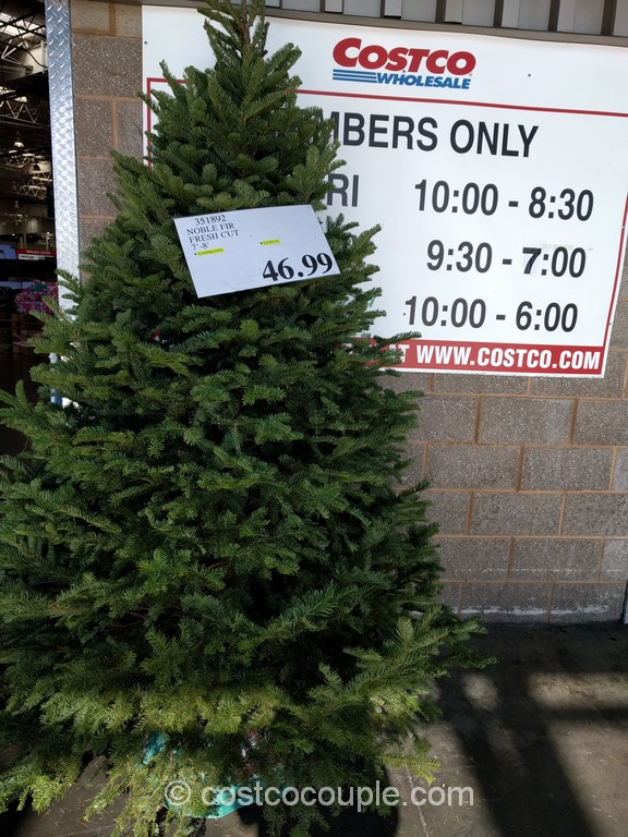 Noble Fir Fresh Cut Christmas Tree Costco 1