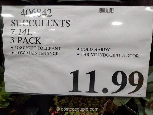 Succulents 3-pack Costco 1