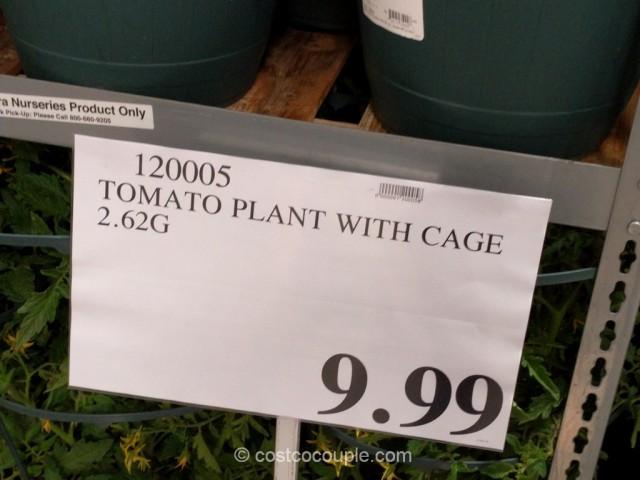 Tomato Plant With Cage Costco 1