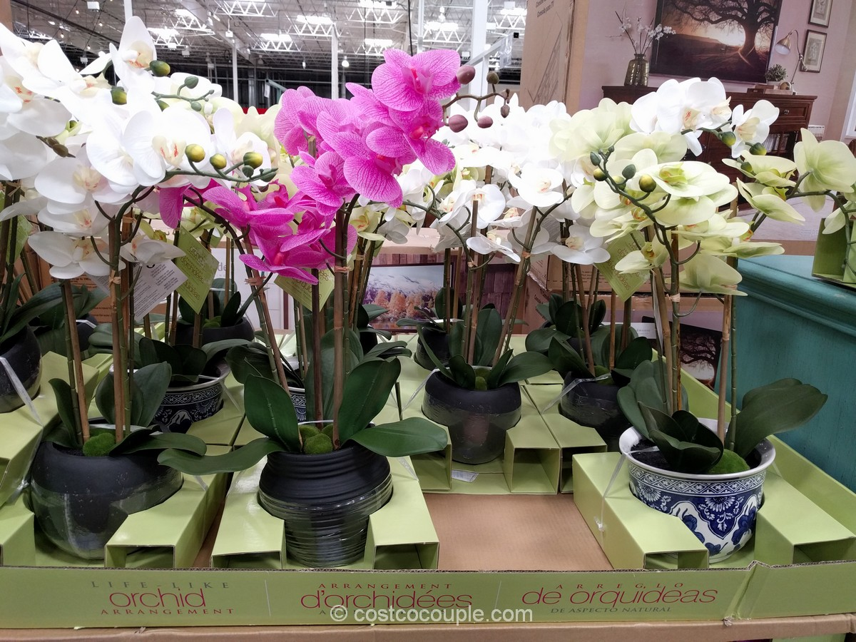 Beaumont Designs Artificial Orchid Costco 2