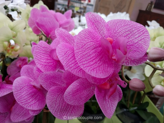 Beaumont Designs Artificial Orchid Costco 3