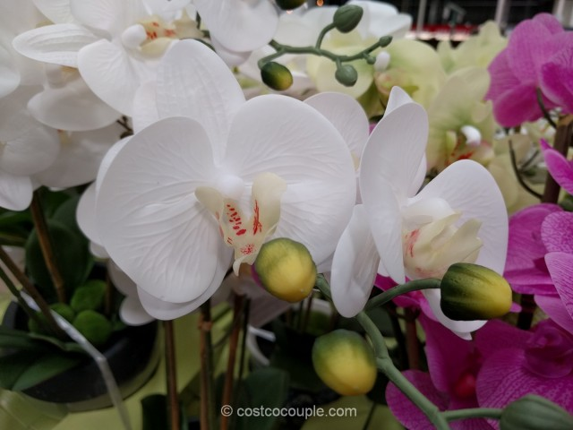 Beaumont Designs Artificial Orchid Costco 4
