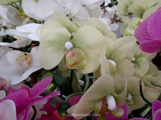 Beaumont Designs Artificial Orchid Costco 5
