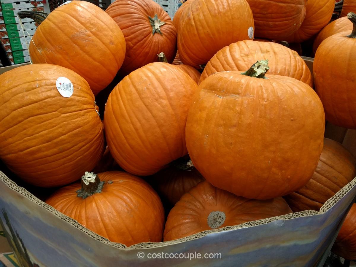 jumbo-pumpkins-costco-2