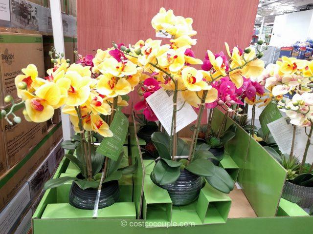 CJ Hunter Home Artificial Orchid Costco