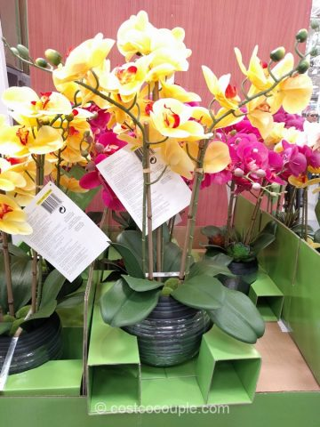 CJ Hunter Home Artificial Orchid Costco