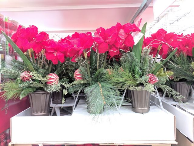 Artificial Potted Amaryllis Costco