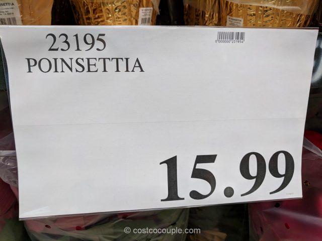 Poinsettia 2017 Costco