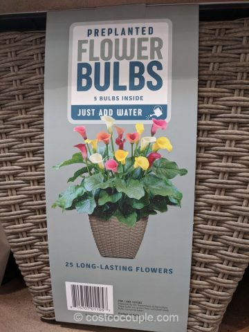 Flower Bulbs Container Costco